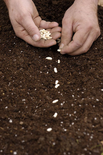 planting-seeds image